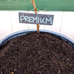 Premium Planters Mix